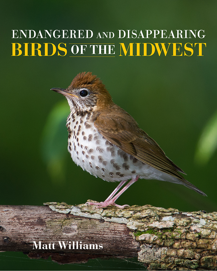 Endangered and Disappearing Birds of the Midwest